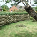 Trellis fencing in Cambridgeshire